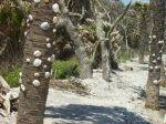 Shells on trees