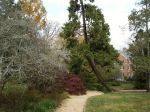 3-coker-arboretum