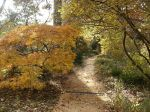 4-coker-arboretum